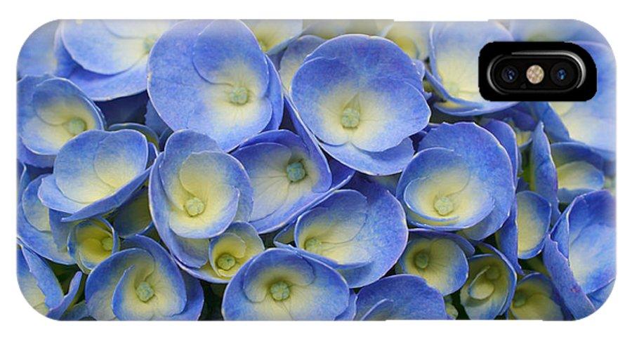 Flora IPhone X Case featuring the photograph Hydrangea Closeup by Gaspar Avila