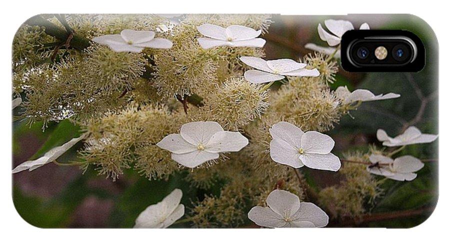 Flower IPhone X Case featuring the photograph Hydrangea. Cream-white. by Viktor Savchenko