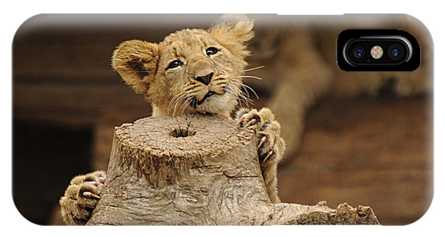 Lion IPhone X Case featuring the photograph I Can Do This by Keith Lovejoy