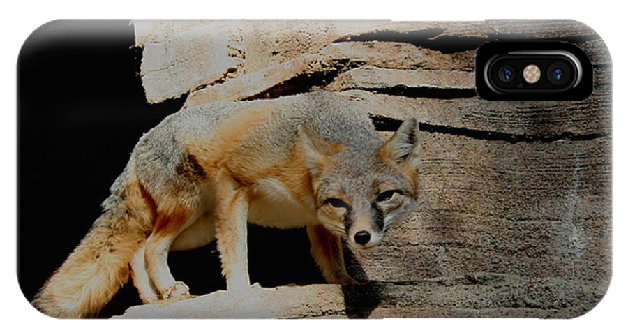 Fox IPhone X Case featuring the photograph I Dont Trust You Really I Dont by David Dunham
