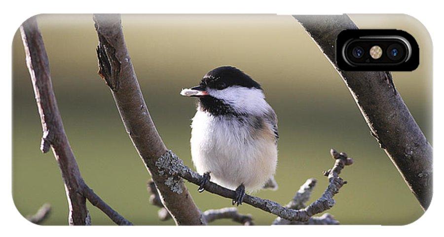 Bird IPhone X Case featuring the photograph I Finally Got It by Deborah Benoit