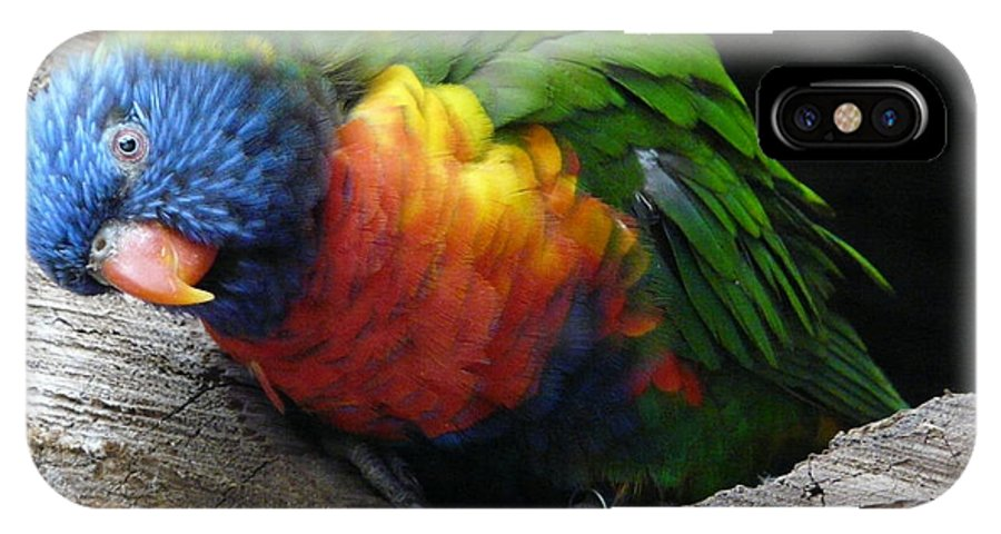 Bird IPhone X Case featuring the photograph I Hear You by Valerie Ornstein