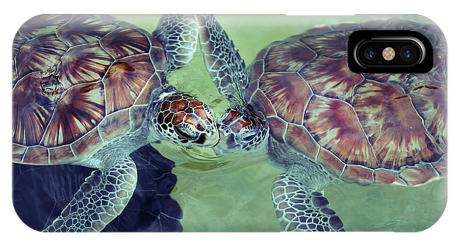 Turtle IPhone X / XS Case featuring the photograph I Kissed A Turtle And I Liked It by Ariane Moshayedi