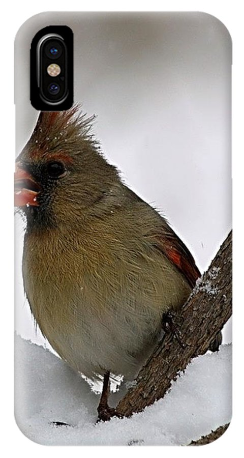 Bird IPhone Case featuring the photograph I Love Seeds by Gaby Swanson