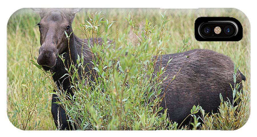 Moose IPhone X Case featuring the photograph I See You by Connie Troutman