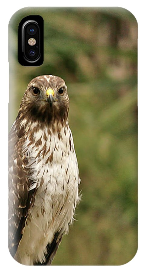 Bird IPhone X Case featuring the photograph I See You by Phill Doherty