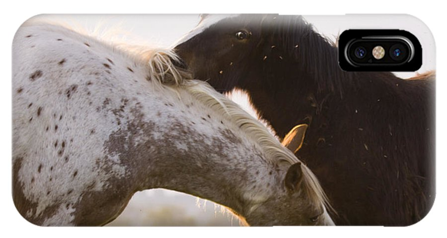 Horse IPhone X Case featuring the photograph I Will Scratch You And You Will Scratch Me by Angel Ciesniarska