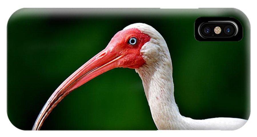 White Ibis IPhone X Case featuring the photograph Ibis Portrait by Julie Adair
