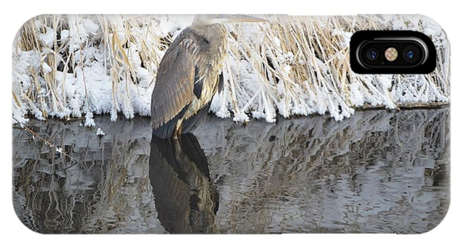 Winter IPhone X Case featuring the photograph Iced Heron by Bonfire Photography