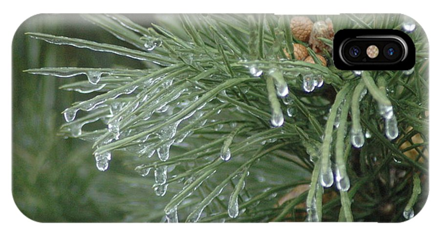 Nature IPhone Case featuring the photograph Iced Pine by Kathy Schumann
