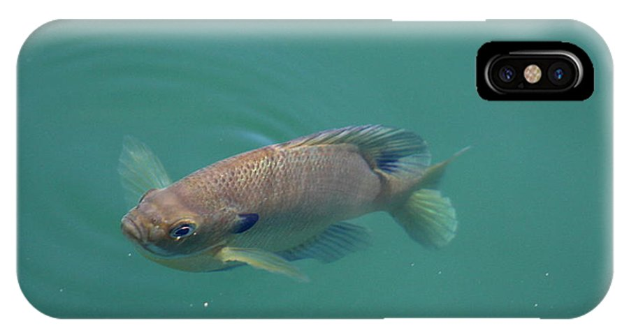 Fish IPhone X Case featuring the photograph Im All Alone by David Dunham