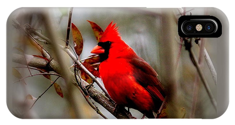 Northern Cardinal IPhone X Case featuring the photograph Img_9241 - Northern Cardinal by Travis Truelove