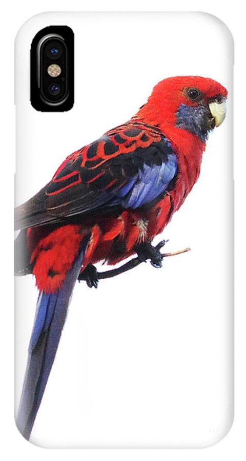 Australia IPhone X Case featuring the photograph Immaculate Portrait Of Crimson Rosella by Max Allen