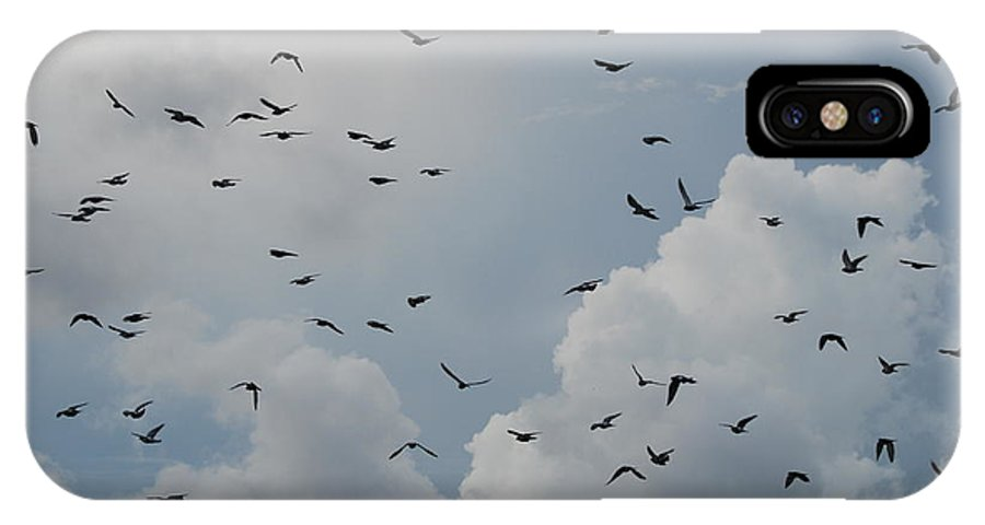 Birds IPhone X Case featuring the photograph In Flight by Rob Hans