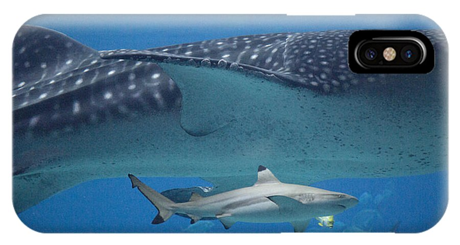 Shark IPhone X Case featuring the photograph In Good Company by Betsy Knapp