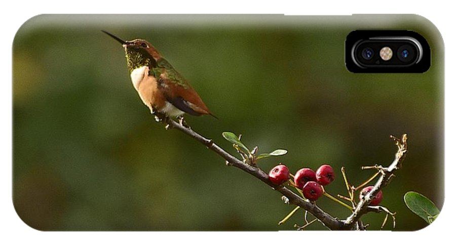 Linda Brody IPhone X Case featuring the photograph In Line With The Branch by Linda Brody