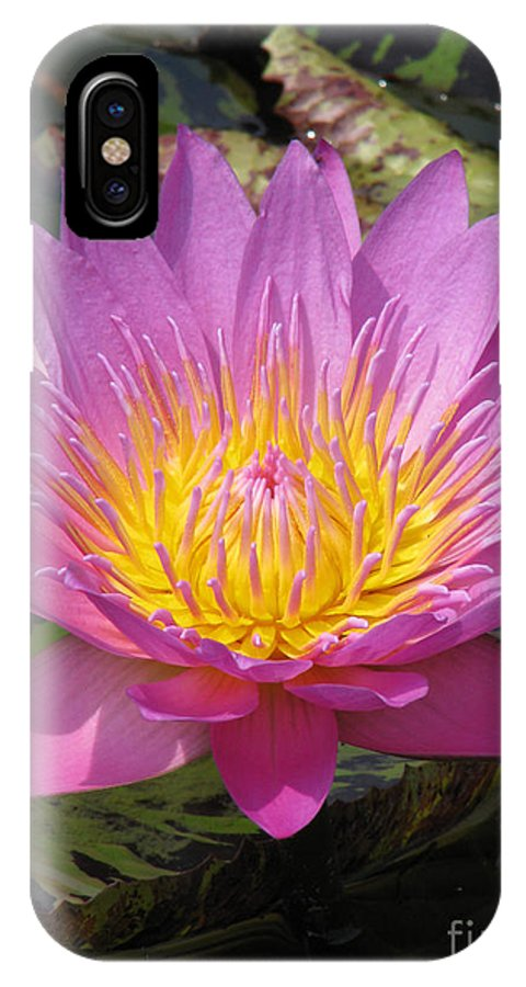 Lotus IPhone X Case featuring the photograph In position by Amanda Barcon