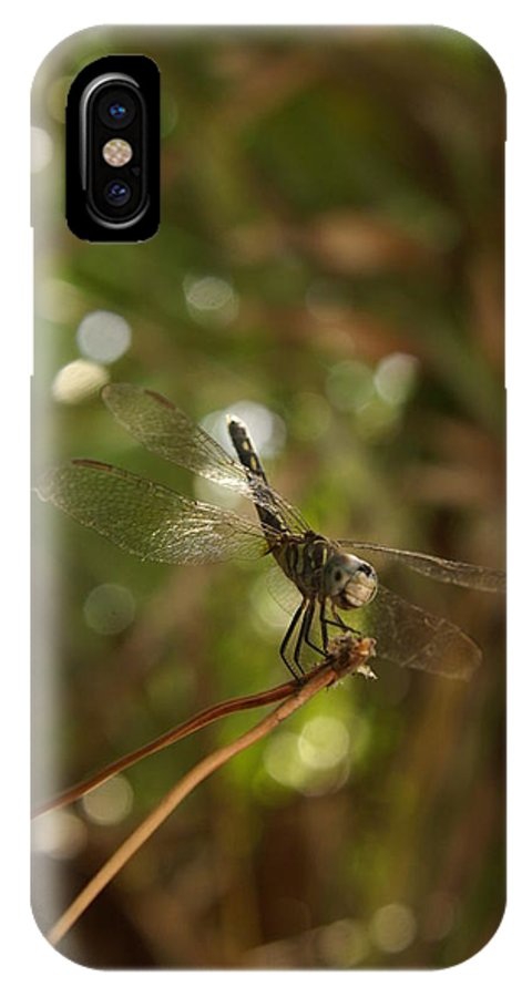 Insects IPhone X Case featuring the photograph In The Forest There Are Dragons by Jack Norton