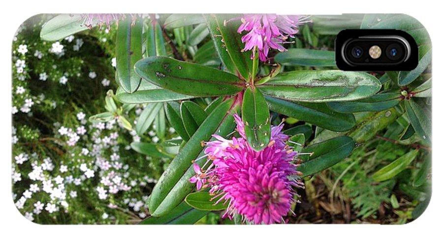 Garden IPhone X / XS Case featuring the photograph Hebe Bush In The Garden by Karen Moren
