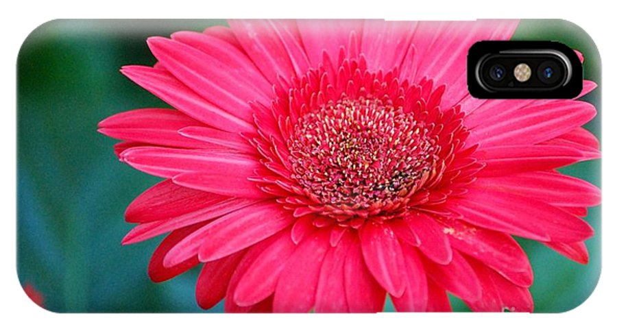 Gerber Daisy IPhone X Case featuring the photograph In the Pink by Debbi Granruth