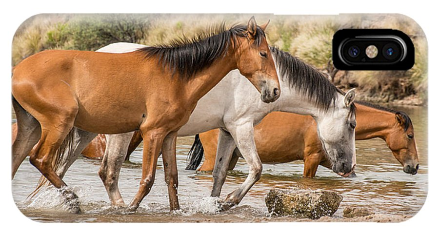Horses IPhone X / XS Case featuring the photograph In The Water by Sandy Klewicki