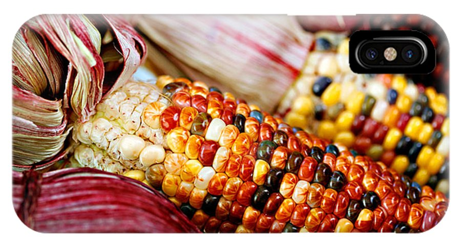 Corn IPhone Case featuring the photograph Indian Corn by Marilyn Hunt