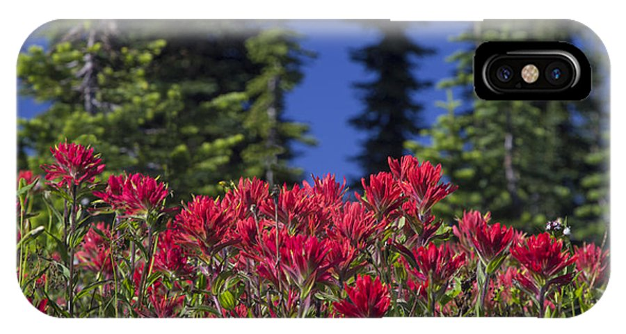 Indian Paintbrush IPhone X Case featuring the photograph Indian Paintbrush by Richard Reinders