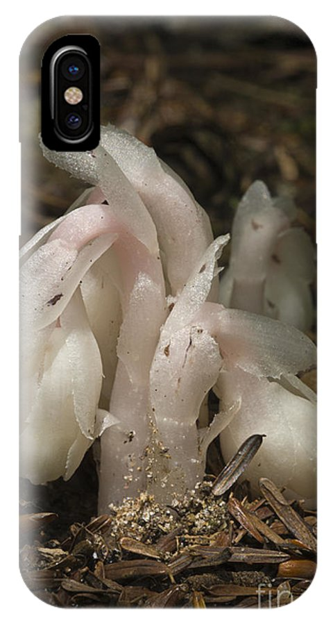 Indian Pipes; Monotropa Uniflora; Saprohyte; Heterotroph; Saprohytic; Wildflower; Native Plant IPhone X Case featuring the photograph Indian Pipes Emerging by John Arnaldi