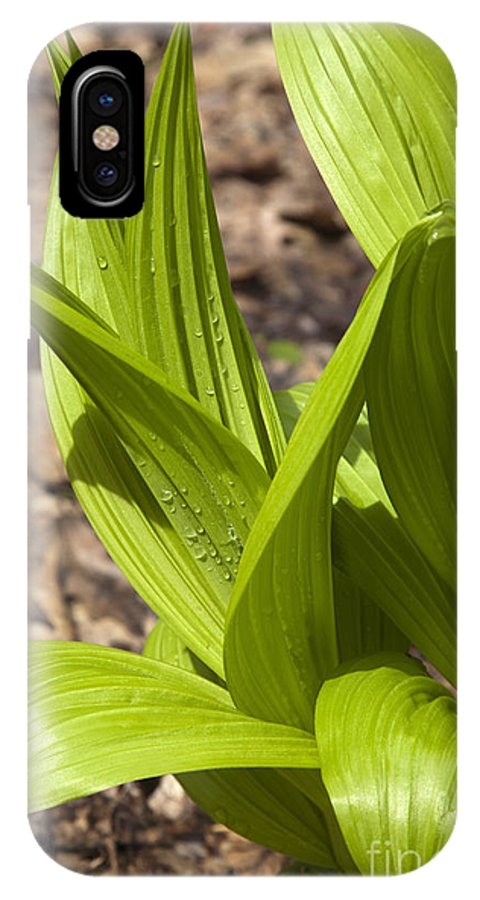 Scenic IPhone X Case featuring the photograph Indian Poke -veratrum Veride- by Erin Paul Donovan