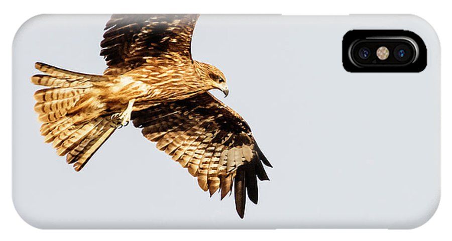 Indian Spotted Eagle IPhone X Case featuring the photograph Indian Spotted Eagle by Vishwanath Bhat