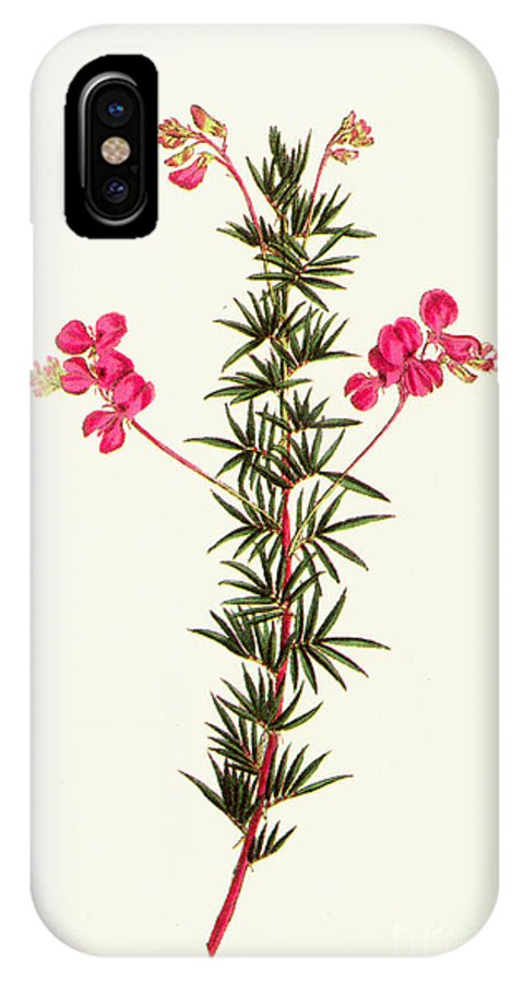1799 IPhone X Case featuring the photograph Indigo Plant by Granger