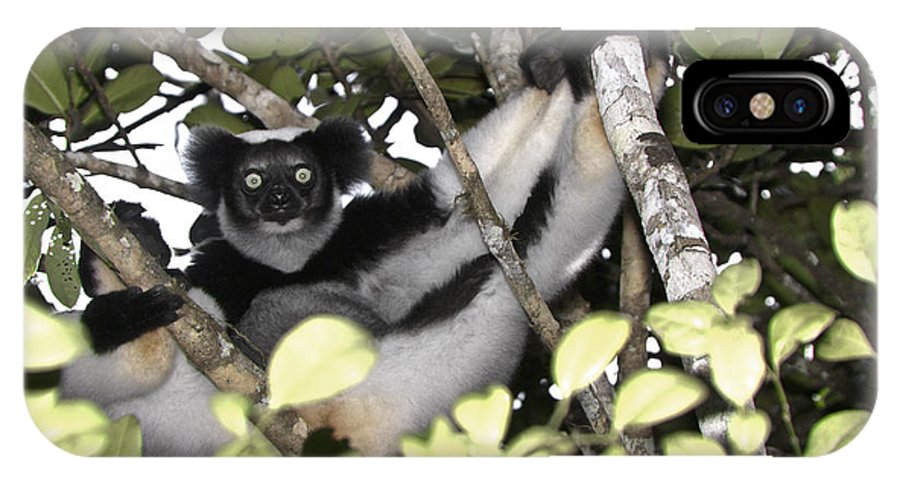 Madagascar IPhone X Case featuring the photograph Indri Indri by Michele Burgess