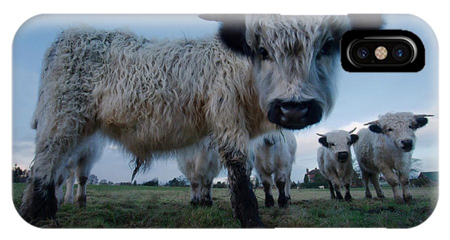 Animal IPhone X / XS Case featuring the photograph Inquisitive White High Park Cow by Rawshutterbug