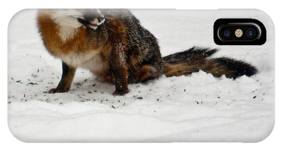 Fox IPhone X Case featuring the photograph Intent Red Fox by Douglas Barnett