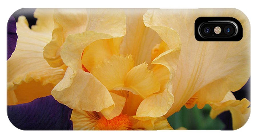 �irises Artwork� IPhone X Case featuring the photograph Irises Art Prints Peach Iris Flowers Artwork Floral Botanical Art Baslee Troutman by Baslee Troutman