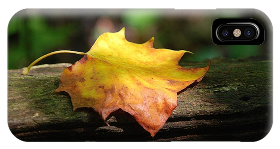 Photography IPhone X Case featuring the photograph Its Fall by Susanne Van Hulst