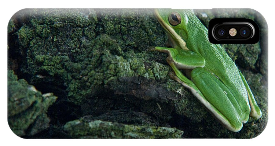Frog IPhone X Case featuring the photograph Its Hard To Be Green by Douglas Barnett