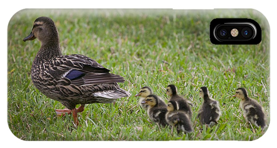 Ducklings IPhone X Case featuring the photograph Its Spring by Mykel Davis