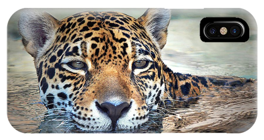 Jaguar IPhone X Case featuring the photograph Jaguar Cooldown by Dan Holm