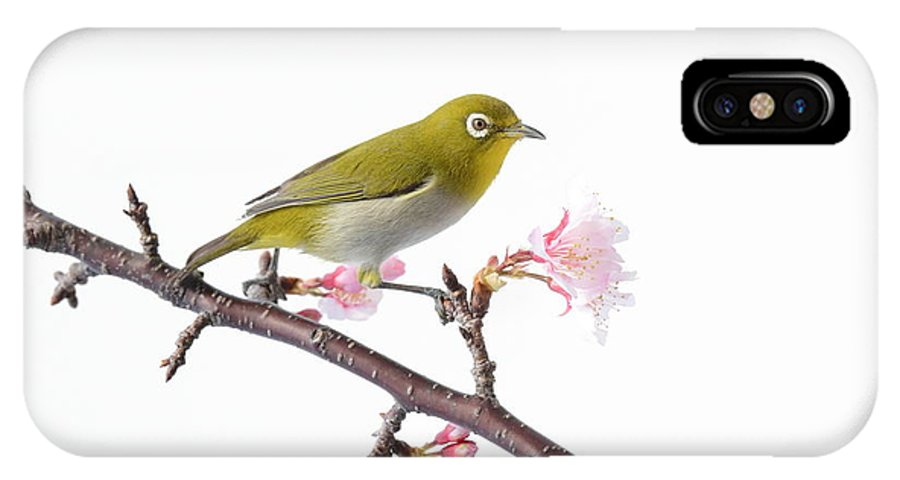 Japanese IPhone X / XS Case featuring the photograph Japanese White Eye by Michael Easley