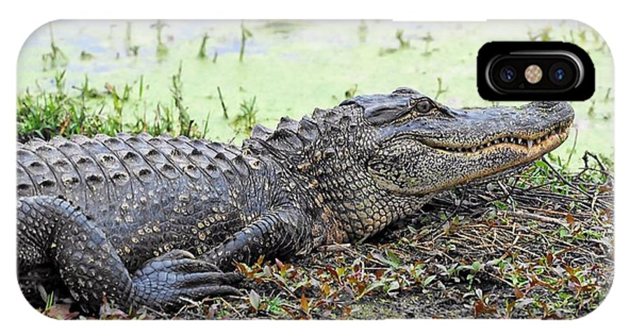 Jarvis Creek Gator IPhone X Case featuring the photograph Jarvis Creek Gator by William Bosley