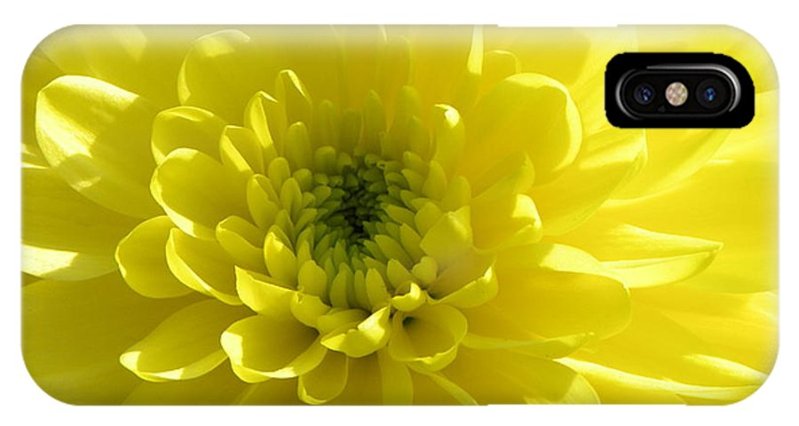 Nature IPhone X Case featuring the photograph Yellow Luminosity by Shannon Turek