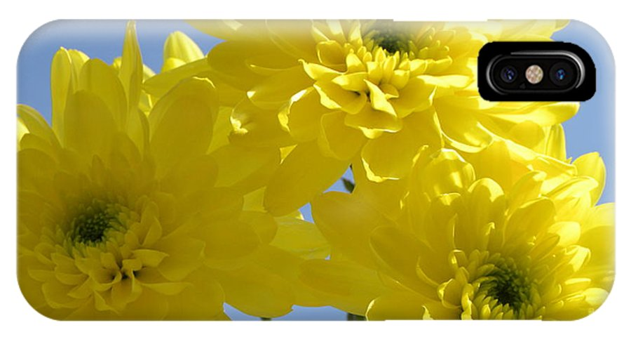 Nature IPhone X Case featuring the photograph Yellow Trio by Shannon Turek