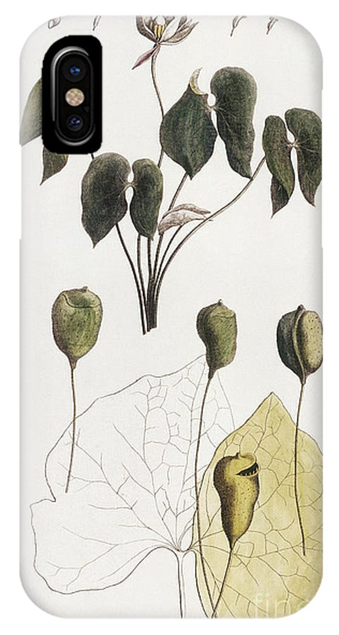 1792 IPhone X Case featuring the photograph Jeffersonia Diphylla by Granger