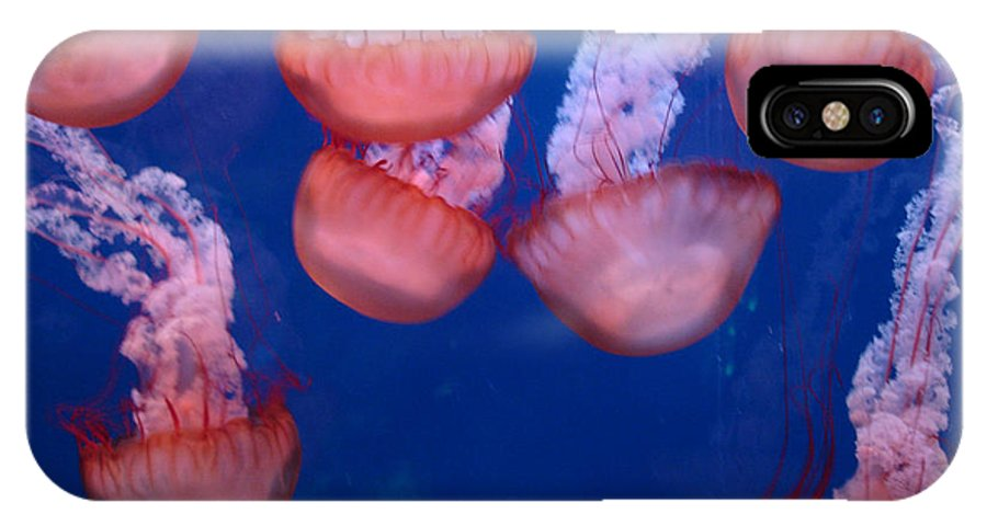 Photography IPhone X Case featuring the photograph Jellies by Shelley Jones