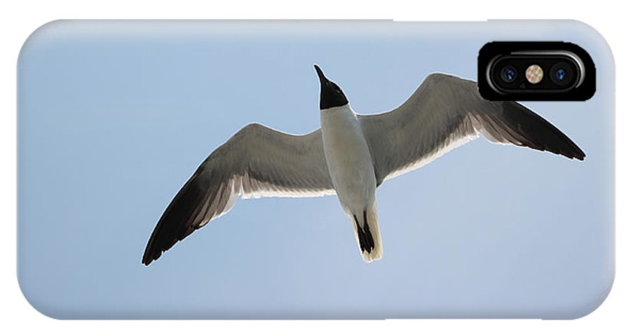 Blue IPhone X Case featuring the photograph Jonathan Livingston by Laura Martin
