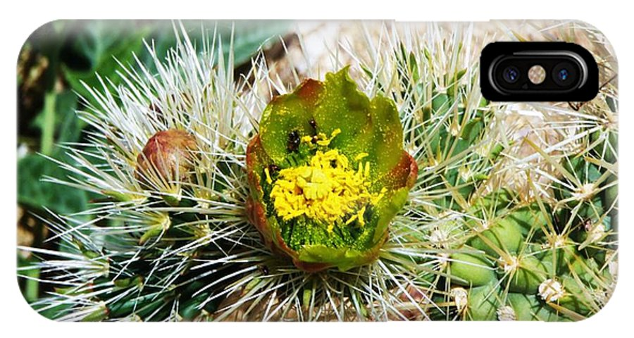Des IPhone X Case featuring the photograph Joshua Tree Cactus Bloom II by Daniele Smith