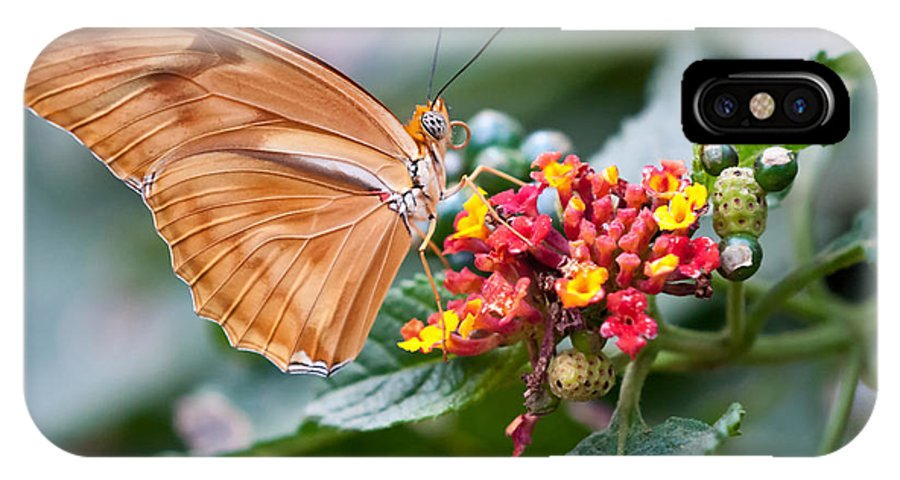 Julia Butterfly IPhone X Case featuring the photograph Julia Butterfly by Eddie Yerkish