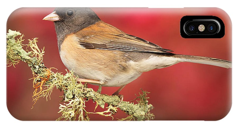 Bird IPhone X Case featuring the photograph Junco Against Peach Blossoms by Max Allen