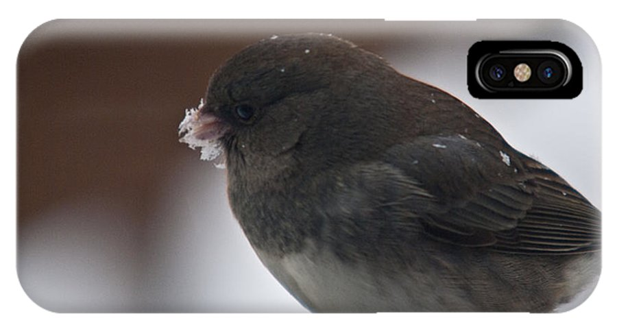 Junco IPhone X Case featuring the photograph Junco In Snow by Douglas Barnett